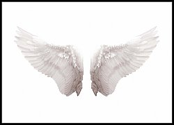 Angel Wing Isolated