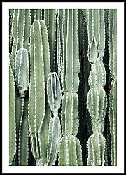 Wall of Cactus